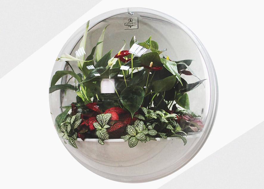 Подвесной живой сад в твоей квартире.