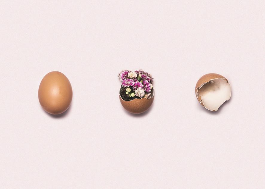 Ключевые исследования в отношении яйцеклеток и овуляции.