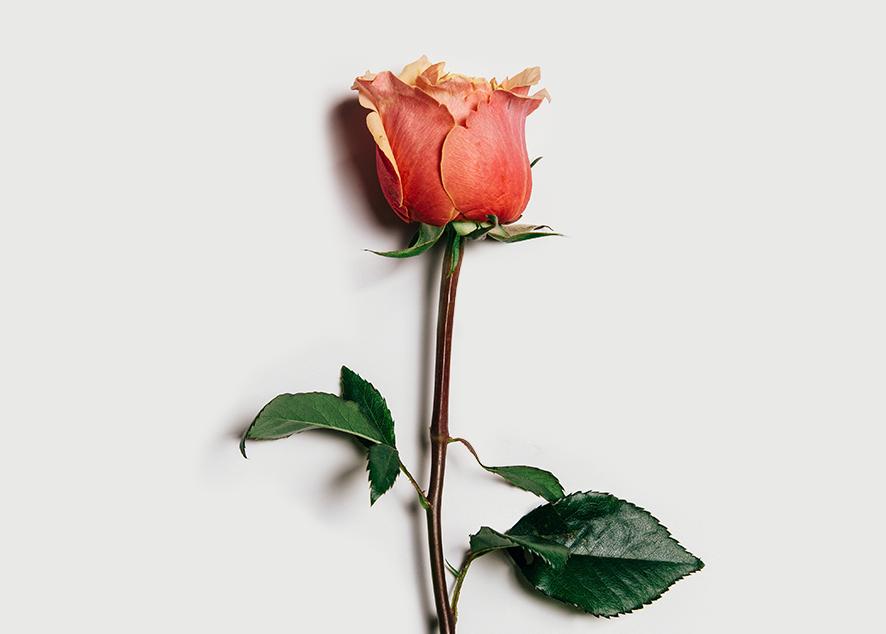 5 причин для перехода с прокладок и тампонов на менструальную чашу.