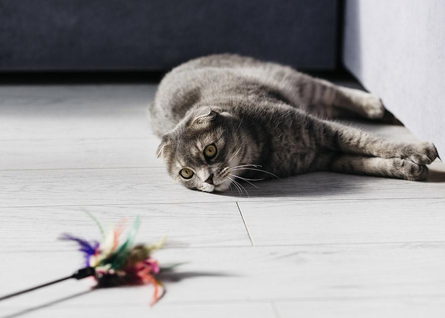 Рецепт кошачьего счастья.